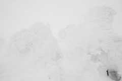 Snow Monsters area Mountain Zao, Japan . Royalty Free Stock Photography