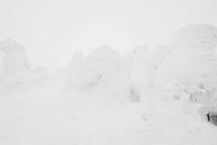 Snow Monsters area Mountain Zao, Japan . Stock Image