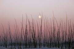 Snow moon. Full moon beauty in winter landscape stock photo