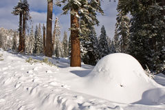 Snow Mound in Sequoia National Park. California royalty free stock photo