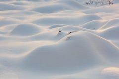 Snow mounds. Erotic snow dunes in the Ukrainian snowy woods evening with soft warm light of sunset Klevan Ukraine. Royalty Free Stock Photos