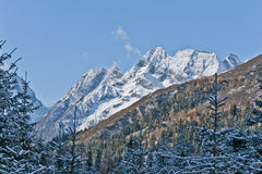 Snow mountain. A snow mountain with snow-covered coniferous trees in front Stock Photo