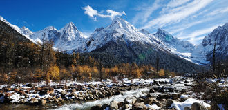 Snow mountain with autumn cedar Royalty Free Stock Photography