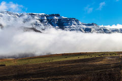 Snow Mountain Cattle Landscape. Winter snow landscape at Sani Pass in the Southern Drakensberg mountains.A popular hiking and climbing area in the seasons. This Stock Photos