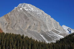 Snow mountain and forest Stock Photos
