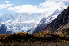 Snow mountain and forest Royalty Free Stock Photos