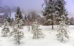 Snow in a mountain forest. Stock Photography
