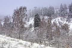 Snow in a mountain forest. Royalty Free Stock Photo