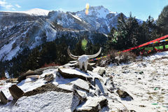 Snow Mountain. In front of a yak skull Royalty Free Stock Images