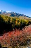 Snow Mountain and golden frosty Stock Photos