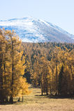 Snow Mountain and golden frosty Royalty Free Stock Photos