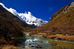 Snow mountain with golden grassland Stock Image