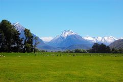 Snow mountain and Grassland Royalty Free Stock Photography