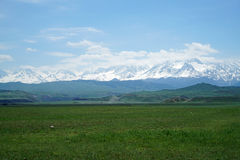 Snow Mountain Grassland Stock Photography