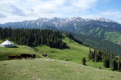 Snow mountain and grassland Royalty Free Stock Images