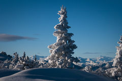 Snow mountain tree Stock Image