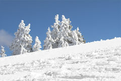Snow mountain trees Royalty Free Stock Image