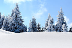 Snow mountain trees Royalty Free Stock Images