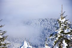 Snow mountain trees in fog. The mountain trees covered with fog Stock Photos