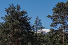 Snow mountain and trees. A small part of the snow-covered mountain between the trees Stock Images