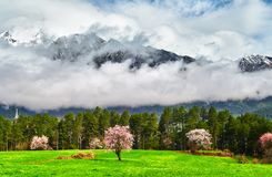The beautiful spring of Tibet Royalty Free Stock Image