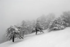 Free Snow Mountain Winter Fog Stock Photos - 11924073