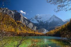 Colorful forest and snow mountain at Yading nature reserve stock images