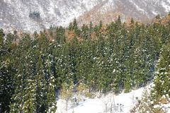 Snow mountains. Beautiful view of snow-mountain trees Royalty Free Stock Images