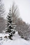Snow in mountains Stock Photo