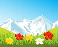 Snow mountains and glade with flower Royalty Free Stock Image