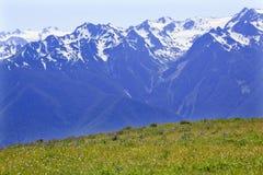 Free Snow Mountains Hurricane Ridge Olympic Park Royalty Free Stock Photography - 16695497