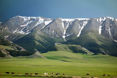 Snow mountains and natural pasture in summer Stock Photo