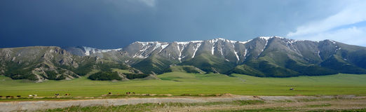 Snow mountains and natural pasture in summer Stock Photography