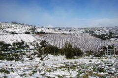 Snow on the mountains. Mountains in the north of Israel in the snow Royalty Free Stock Images