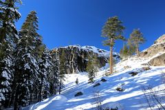 Mountain snow with pine trees stock photography