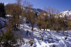 Snow in the mountains. Small Almaty gorge spring Stock Photography