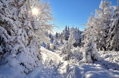 Snow in mountains. Snowy path in polish beskids mountains royalty free stock image
