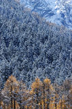 Snow moutain and the forests. Winter Landscape, Tree Forest Covered by Snow stock photo