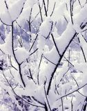 Snow on My Branches. A close-up of snow covered flora stock photo