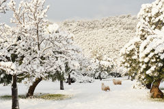 Snow in nature Stock Photography
