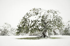 Snow in nature Stock Photos