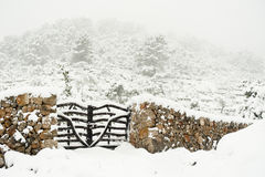Snow in nature Royalty Free Stock Images