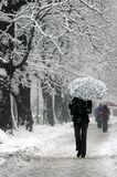 Snow new 3. Adult walking through city during snowstorm Stock Image