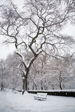 Snow in New York. It was taken to record the continuous storm in  New York Royalty Free Stock Image