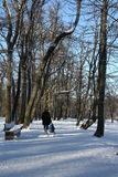 Snow in Normafa,Budapest,Hungary Royalty Free Stock Image
