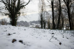 Snow now Stock Images