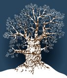 Snow oak Royalty Free Stock Image