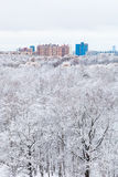 Snow oak trees in forest and town in winter day Stock Image