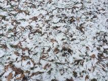 Snow och lämnar Arkivbild