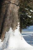 Snow och tree royaltyfria foton